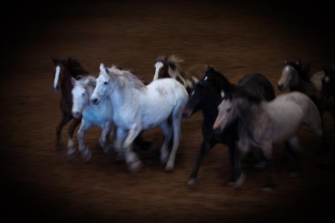 horse tribute